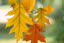 Harvest / Recipes, crafts and decor to celebrate the beauty of autumn.
