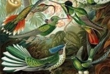 vintage flora & fauna illustrations