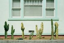 yo! cactus / All of the cacti