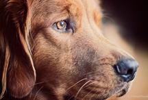Man's Best Friend / I love dogs...