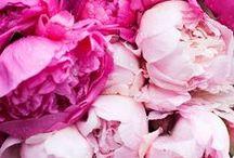 FLORALS / Beautiful florals and flower arrangements.