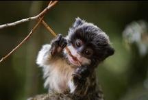 Cute Animals / by Libby Johnson