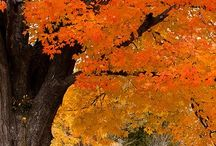 Autumn Beauty / The fall...my favorite season. / by Gloria