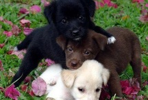 adorable / Cute / by Cattymoomoos