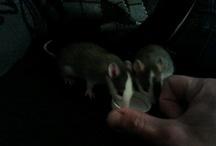 Rats / by Thamara Trompert