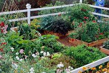 Garden & Yard / by Carolyn Finck
