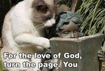 LOLcats / by Batya Harlow