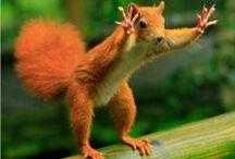Animals ~~ Squirrels, Chipmunks, Ground Squirrels, and more / by Batya Harlow