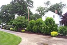 Screening plants / Plants to give you a little privacy or provide a wind break.