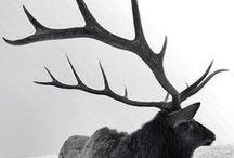 animal | life | fauna / by kyla