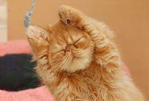 Cats  / I love cats... / by Gisel Zazueta
