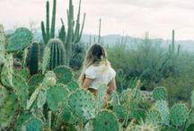 succulents | cacti | terrariums / by kyla