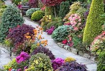 GARDENING / Everything gardening.  From how to decorate your garden to how to grow it. / by Cynthia Eschendal