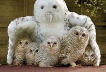 Owls / by Maria Simon