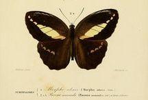 botanical | zoological | naturalist / by kyla