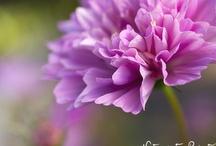Blumenbilder / Blumenbilder, die glücklich machen. Auf Leinwand, als Kunstdruck oder Fototapete im Wunschformat.