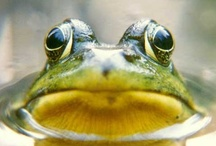 Frogg! / Everything Frogs! / by Sandra Walling