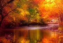 it's FALL...yall'...... / ..everything Fall! / by Sandra Walling