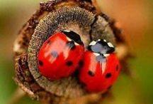 """LadyBug...LadyBug..... / ....I Love these """"Little Ladies""""! / by Sandra Walling"""