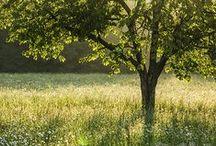 Landschaften / Leinwanddrucke und Kunstdrucke mit reizvollen Landschaften.
