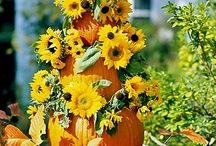 Fall / by Linda Hudick