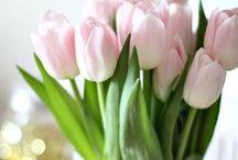 my dear Spring!