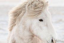 +WHITE+ / by Mary Ellen Skye