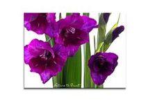 Violett, wie variabel / Violett ist immer wieder anders. Vom romantischen Lavendelblau, über das Purpur der Zistrosen bis hin zum dramatischen Violett prachtvoller Gladiolen sind viele Interpretationen drin. Das gleiche gilt für Violett im Wohnbereich. Wer sich an diese Farbe traut, hat die freie Wahl: Leben und wirken wie das bescheidene Veilchen oder doch wie eine Königin?