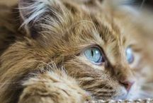 Cats - so much love / by Cat Man Du