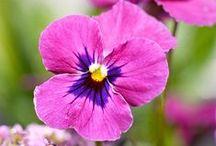 Beautiful Flowers / by Cat Man Du