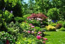 Dream Gardens / by Cat Man Du