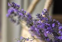 Lavender Love / by Cat Man Du
