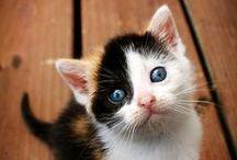 Cute kittens / by Cat Man Du