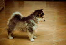 Puppies and other furry creatures i love! / by Jeannine Ruano