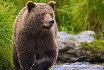 Bears / by Cat Man Du
