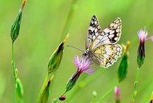 Butterflies/Dragonflies / by Cat Man Du