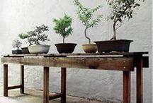 Indoor Gardening & Herb Ideas / by Crystal Lee Garza