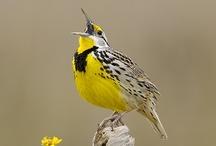 Birds / by Judith Ebert