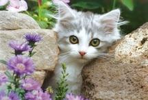 =^.^=   Kitty Kat  =^.^=