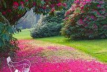 Botanical Paradise / by Angie Fehl