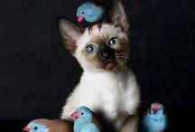 The Joy Of Animals!!!