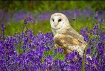 Owl & owlet