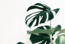 Botanical / A stunning collection of lush greenery.