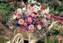 Flowers / by Linda Still