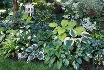 Gardening & Outdoors / by Kelley Davis