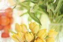 Flowers & Gardening / by Susan Sherman