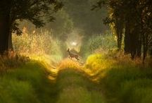 In-the-Forest / by AW