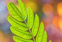 Leaves / by AW
