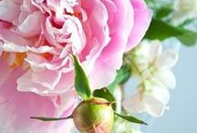 Peonies / by AW