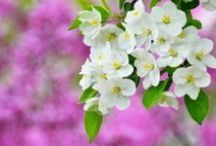 SpringTime / by AW